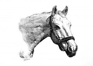 Paard laten tekenen